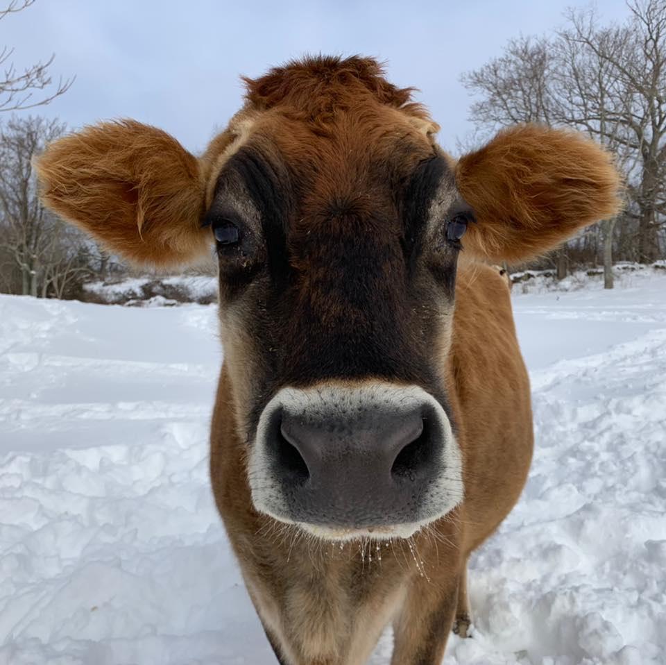 FREE Experience Muscoot Farm in Katonah, NY