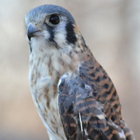 Sundays on the Lawn: Hudson Valley Wildlife at Teatown at Kingsland Point County Park in Ossining, NY