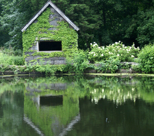 FREE! Explore the Trails at Sheldrake Environmental Center in Larchmont, NY