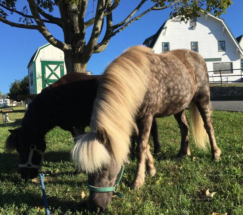 FREE! Tilly Foster Farm & Educational Institute in Brewster, NY
