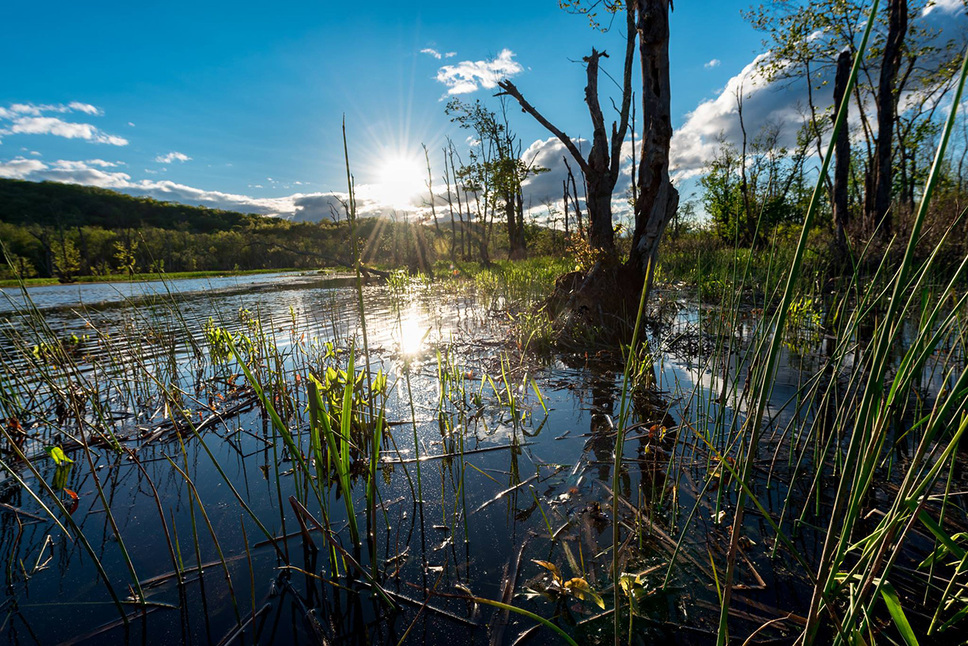 FREE! Fall Celebration of the Great Swamp Art and Photography Show at Christ Church on Quaker Hill in Pawling, NY